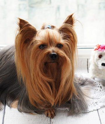W jakim okresie najlepiej ostrzyc psa? Poradnik