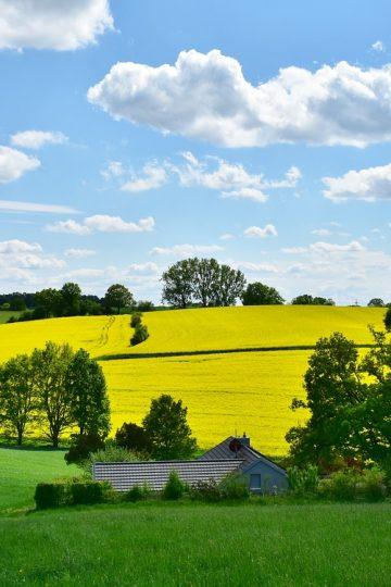 Rola środków ochrony roślin w rolnictwie i ogrodnictwie